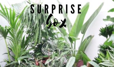 50% korting op een Kamerplanten Surprise Pakket